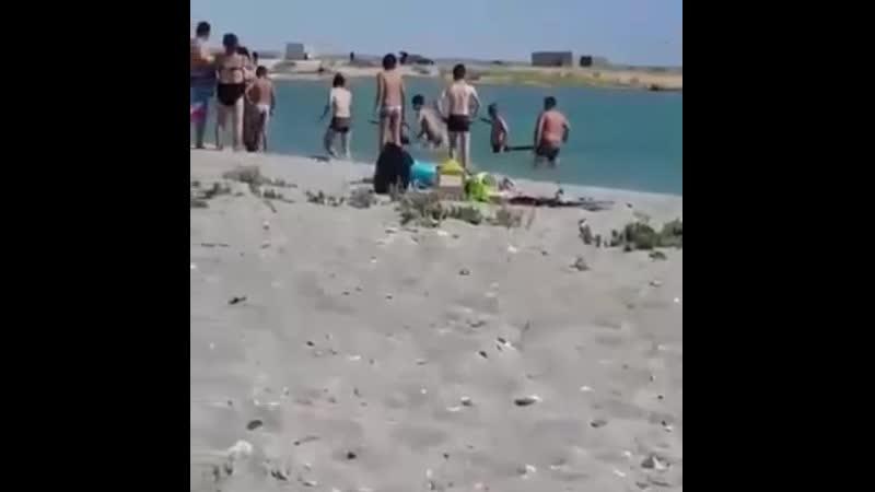 Отдыхающие на пляже забили камнями и палками тюленя который подплыл к ним ради