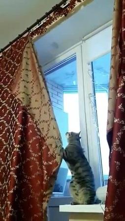 Fucking cat · coub коуб
