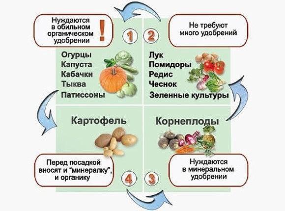 Совместимость овощей в теплице  залог богатого урожая