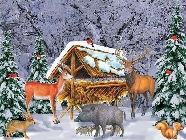 Как зимуют лесные жители С наступлением холодов жизнь в зимнем лесу замирает. Давайте, посмотрим, кто как зимует.У многих птиц и зверей к зиме отрастают новые перья и шерсть. Тетерев обзаводится