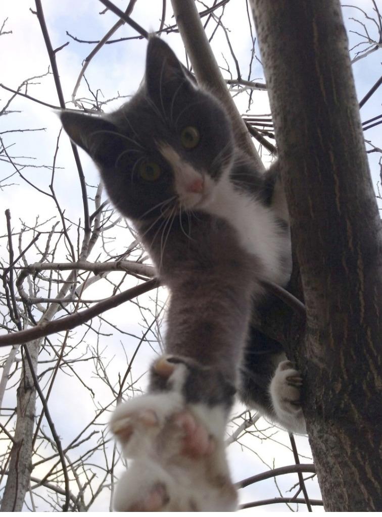 Нет времени объяснять, хватай лапу, лезем на дерево