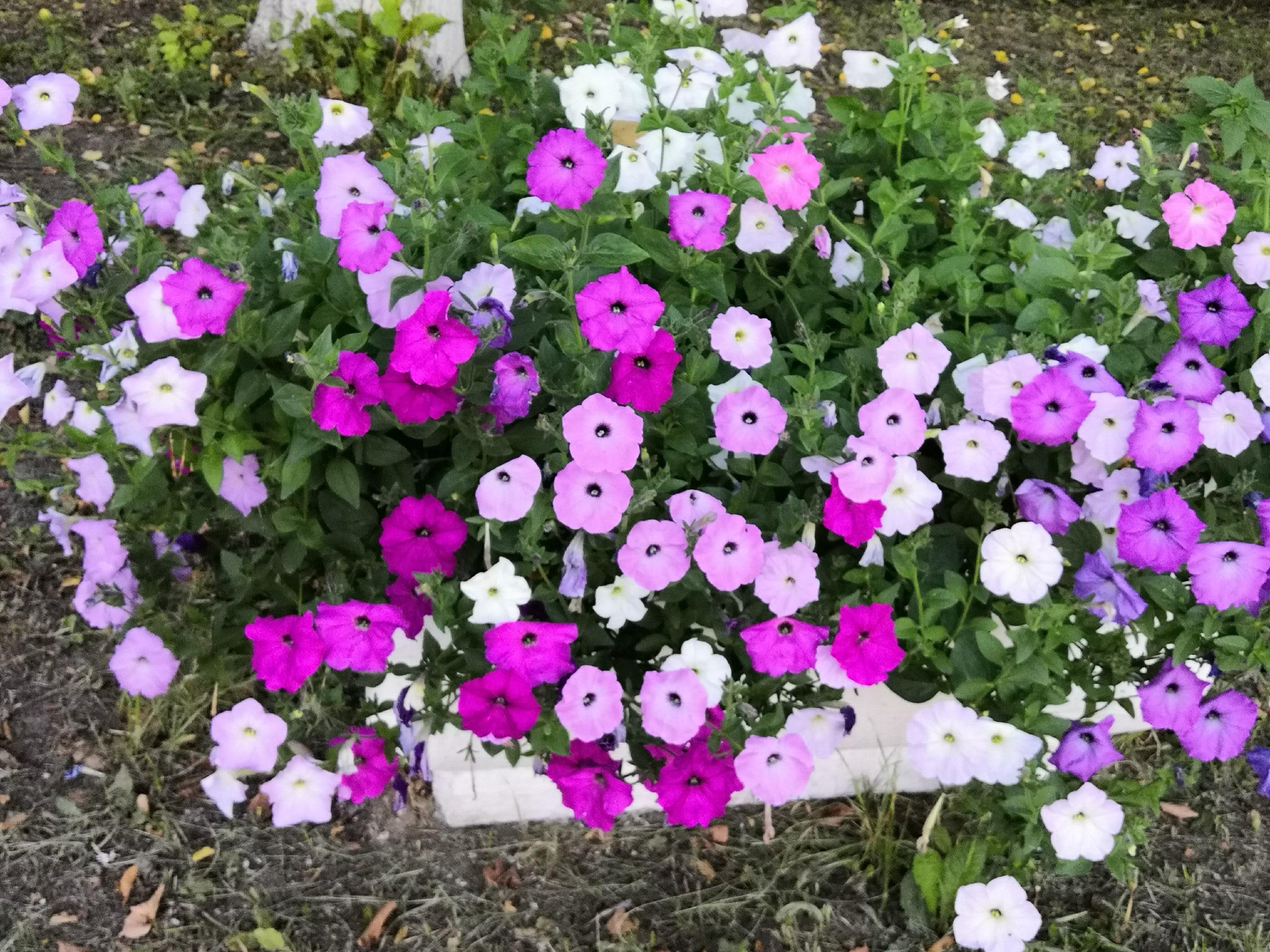 Однолетние растения - Страница 2 5k823IbdFp4