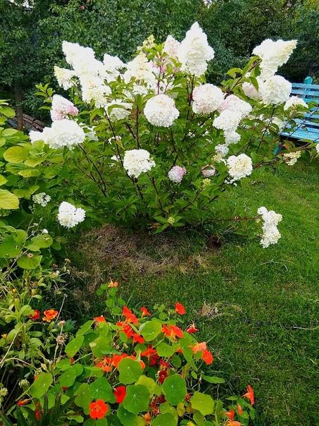 Очень красиво!!! сад Людмилы Батуриной