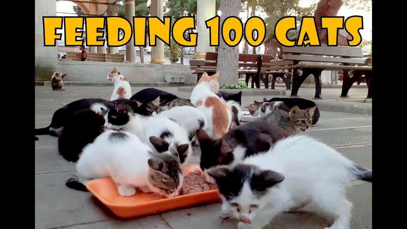 Feeding 100 Stray Cats 2 Turkey's Cat Island Cute Cats Cute Kittens