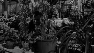 1962 - Dias de Vino y Rosas HD - Blake Edwards