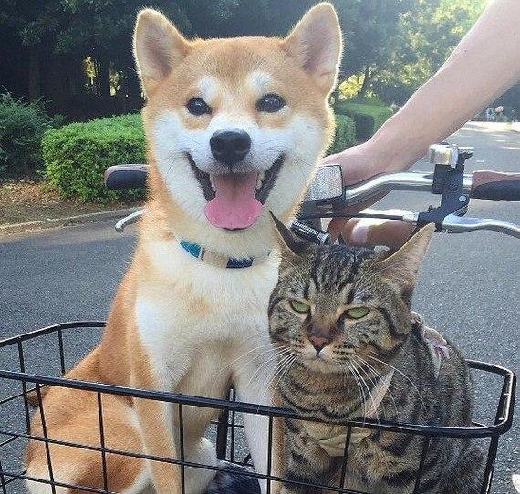 """""""Да, пёс, я тоже рад каждой секунде этой прогулки."""""""