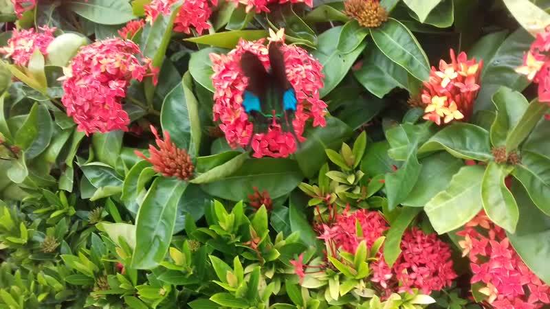 Бабачка на цветочках в парке Олень повернул голову