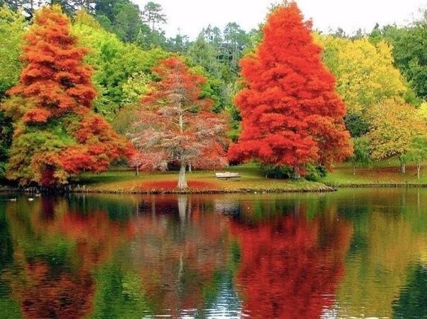 Красавица осень!