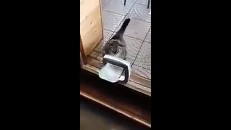 Kitty balbоa nоt in thе mооd fоr jоkеs nоw