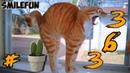 СМЕШНЫЕ КОТЫ 2020 КОШКИ Приколы С Кошками и Котами 2020 Funny Cats