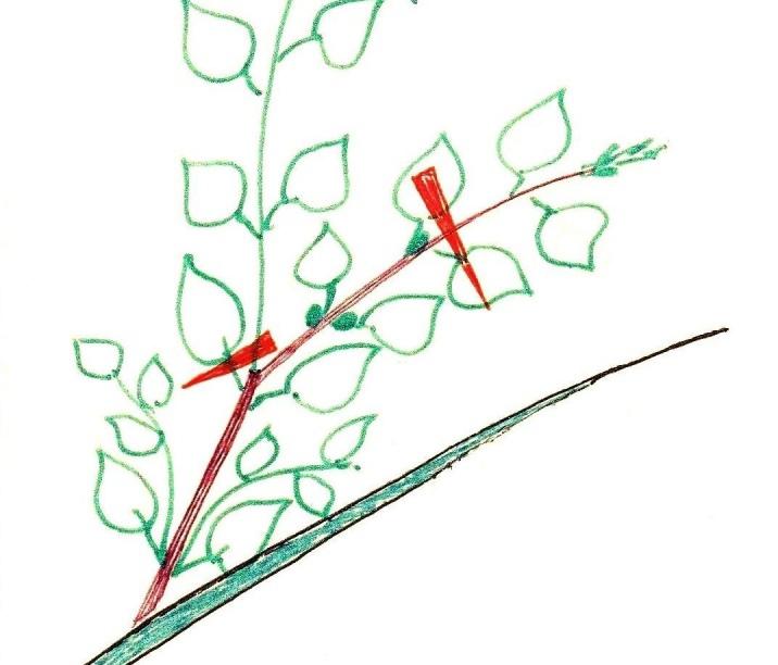 Как сделать Чудо-Дерево, забитое плодами., изображение №3