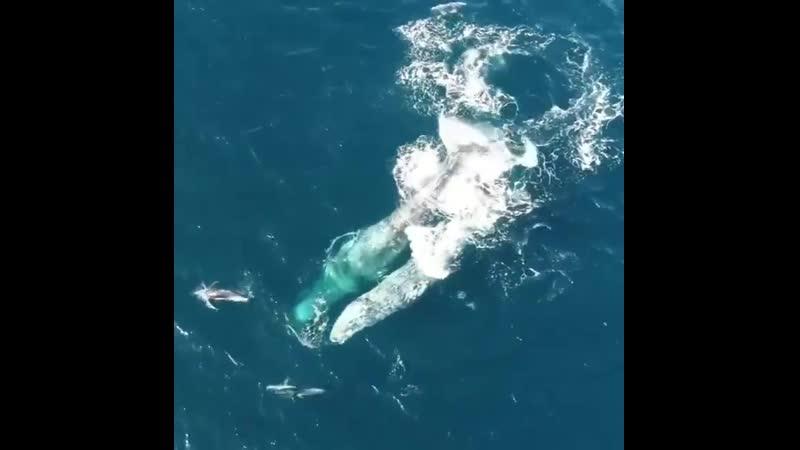 Киты и дельфины играют друг с другом в Тихоокеанском бассейне Природа поистине невероятна 😍🐬