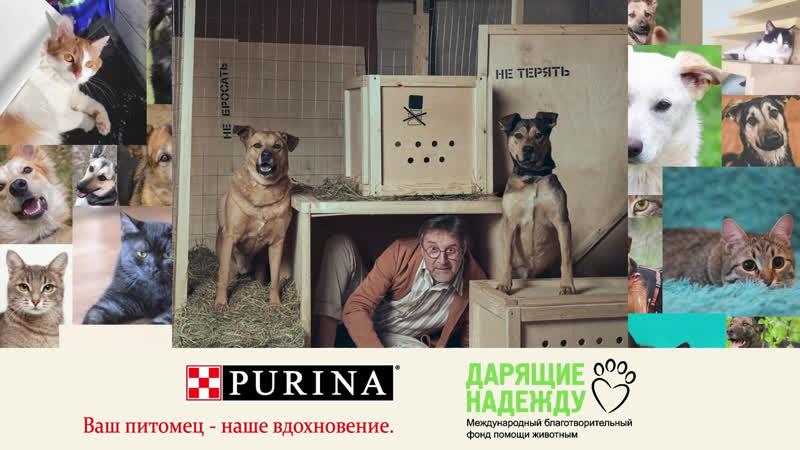 Онлайн-выставка пристройство приютских собак и кошек Домой