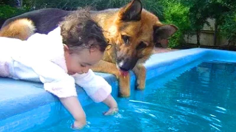 「赤ちゃんと犬」何をされても怒らないジャーマン・シェパード犬・優