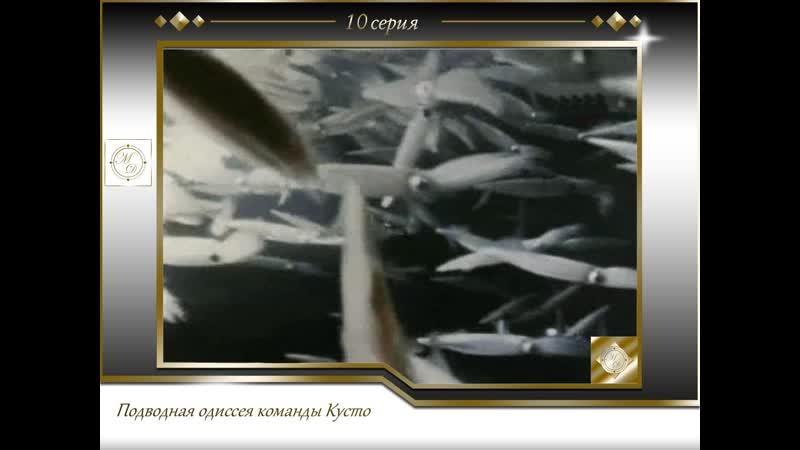 Подводная одиссея команды Кусто Выпуск 10 Ночь кальмара 10 1970