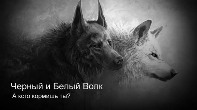 Чёрный и белый волк