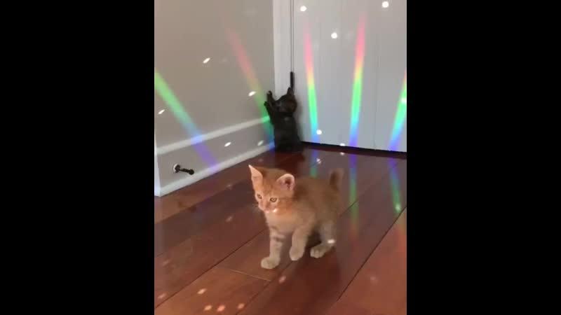 Дискотека у котиков