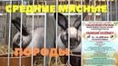 Полный обзор пород кроликов на выставке в Чехии Голуби и птица