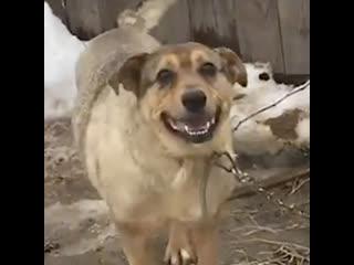 В Костроме мужчина случайно нашёл свою потерянную собаку в приюте