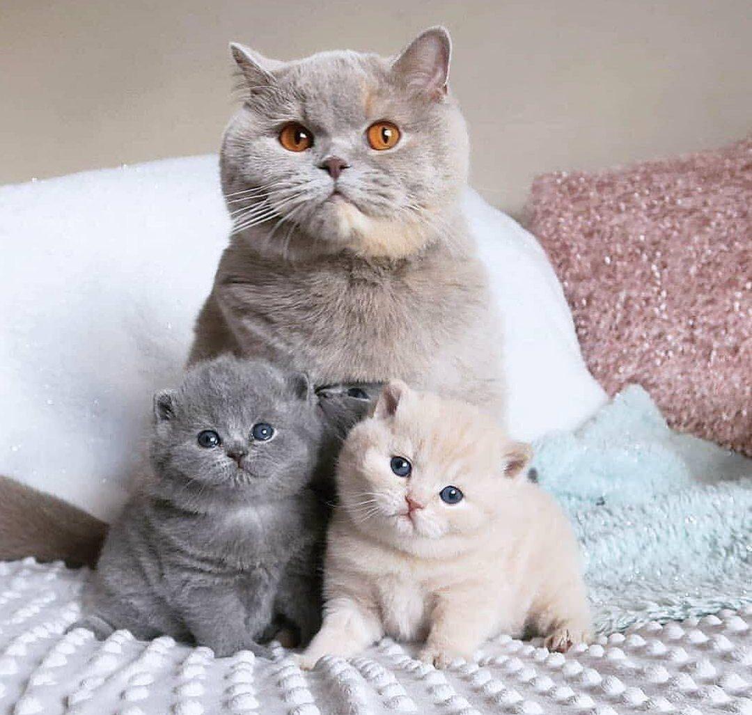 Ceмейное фото!!!