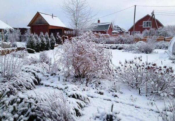 Влияние снега на урожай Народная примета гласит: «Снег глубок и хлеб хорош». Исследования это только подтверждают: чем больше снега, тем выше урожай, особенно ягодных культур: красной и черной