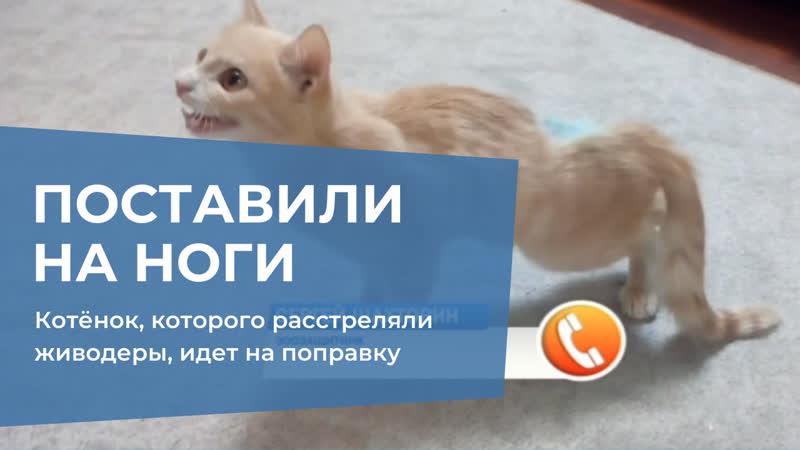 Котёнок, которого расстреляли живодеры, идет на поправку