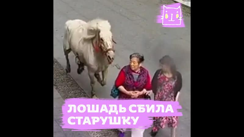 Застрелили обезумевшую лошадь