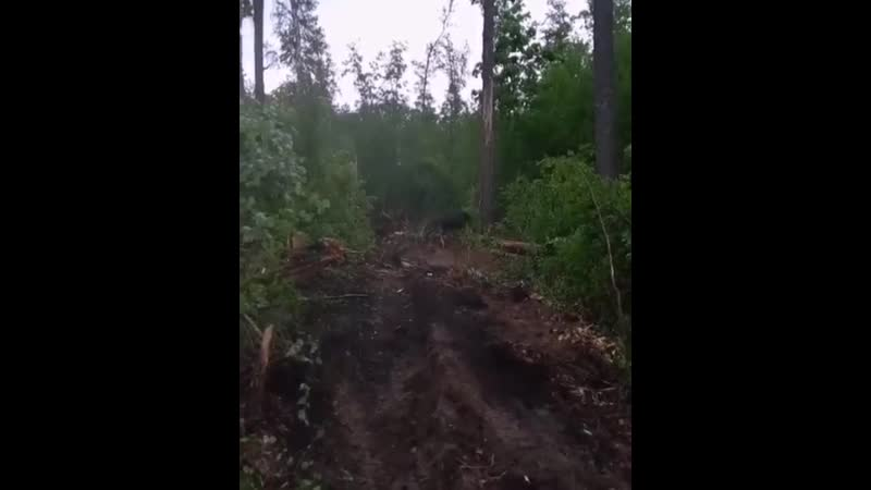 Возгорание леса на границе с Мордовией