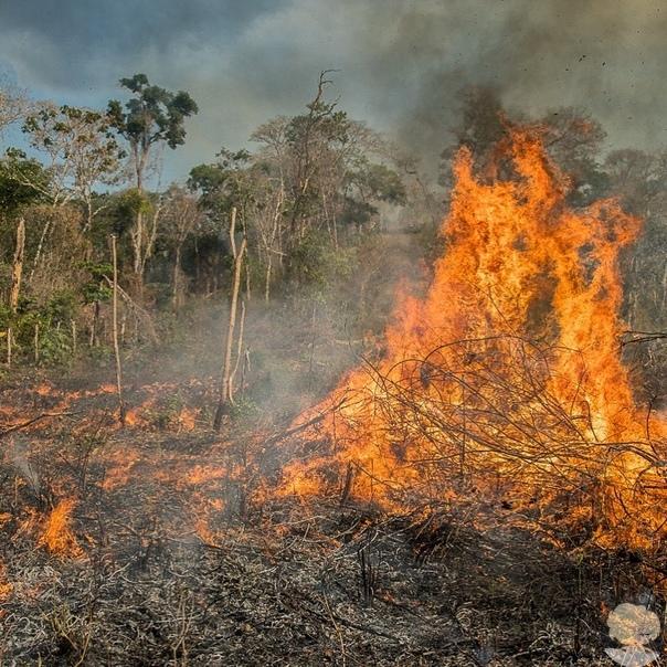 Леонардо Ди Каприо пожертвовал 5 миллионов долларов на спасение лесов Амазонки