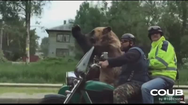 What Never saw a bear before