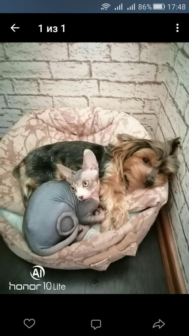 Собака и кот лучшие друзья