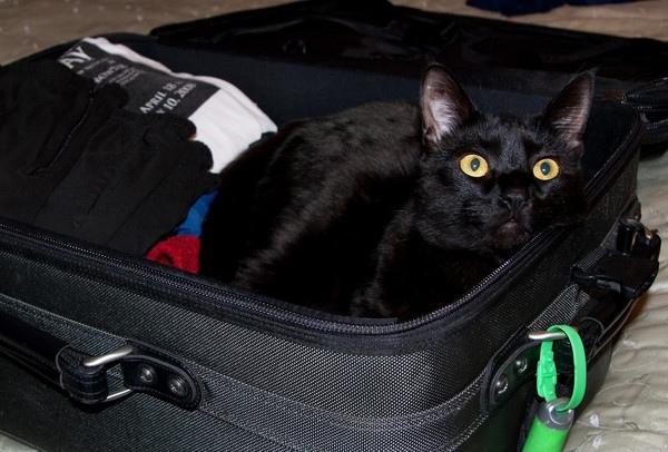 ХОЛОДНАЯ МЕСТЬ Алиса переехала к Ивану год назад. Быстро привела в порядок его холостяцкую квартиру. Почти сразу нашла с черной кошкой Люсей общий язык, и они вместе с ней вечерами дожидались