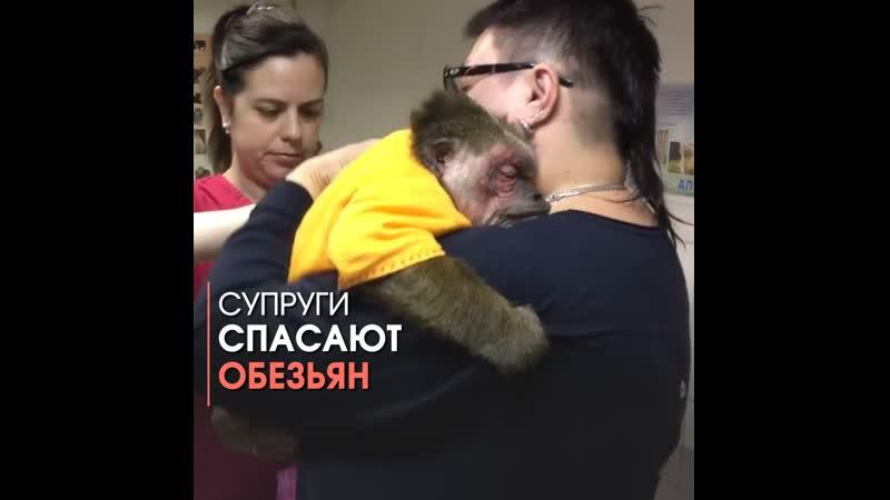 Супруги из Подмосковья спасают обезьян