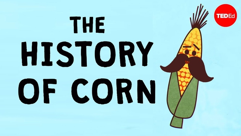 The history of the world according to corn Chris A Kniesly