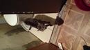 Адский кот! орёт на хозяина. не пускает в туалет