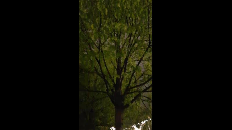 Соловьиное пение 2 9 мая 2020 года Александровский сад