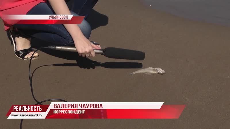 Валерия Чаурова о массовой гибели рыбы