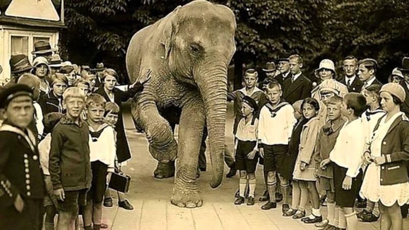 Кёнигсбергский зоопарк от основания до наших дней