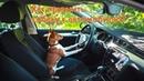 Как приучить щенка к автомобилю?