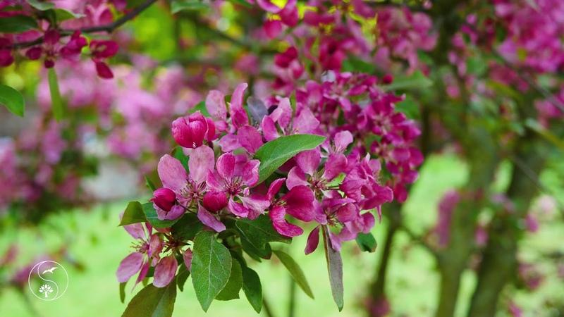 Красивая Расслабляющая Музыка Красивая природа с Пением Птиц под Музыку Цветущий сад