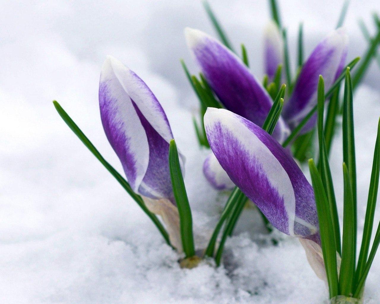 С первым днем весны всех.