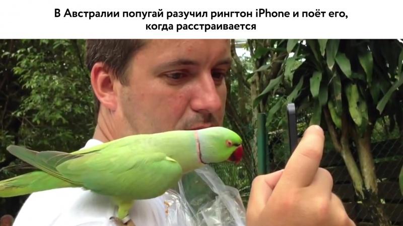 20.12 | ОСН #18. Тоскующий попугай