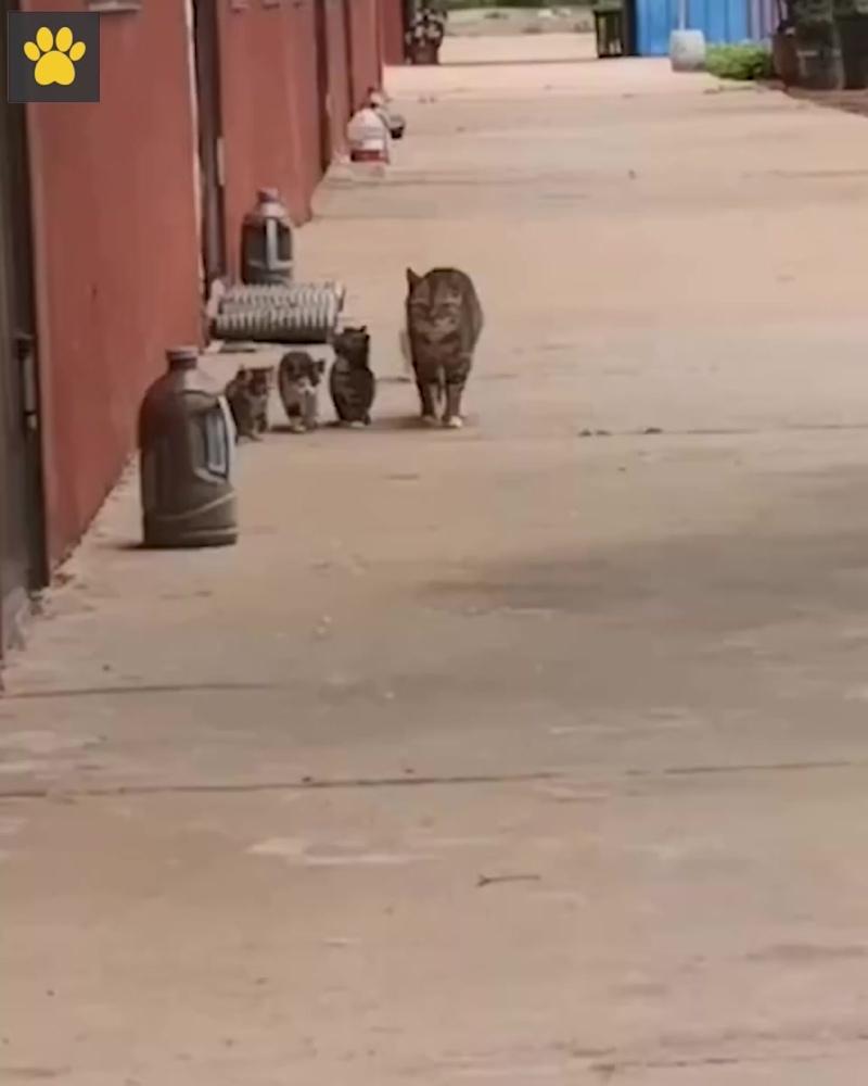 Мама-кошка гуляет с котятами