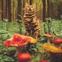 Личная фотография Александра Радищева