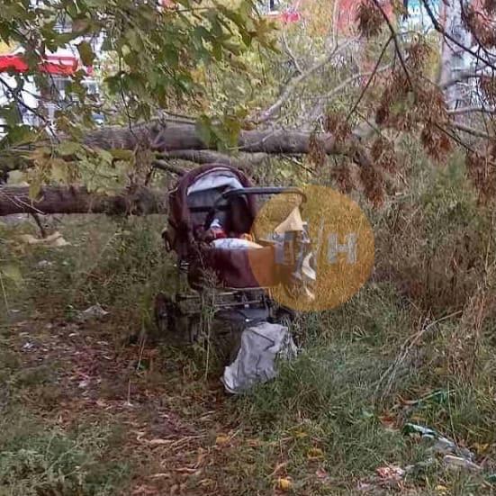 ❗️В кустах на Мончаге нашли брошенную коляску с ребёнком ...