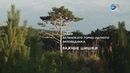 Тайны Ялтинского горно-лесного заповедника. Важные шишки