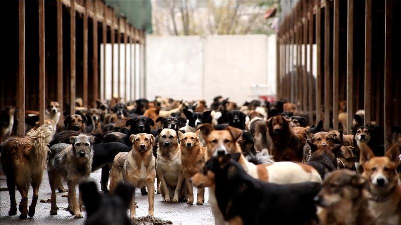 Каждая собака документальный фильм о приютских собаках смотреть онлайн без регистрации