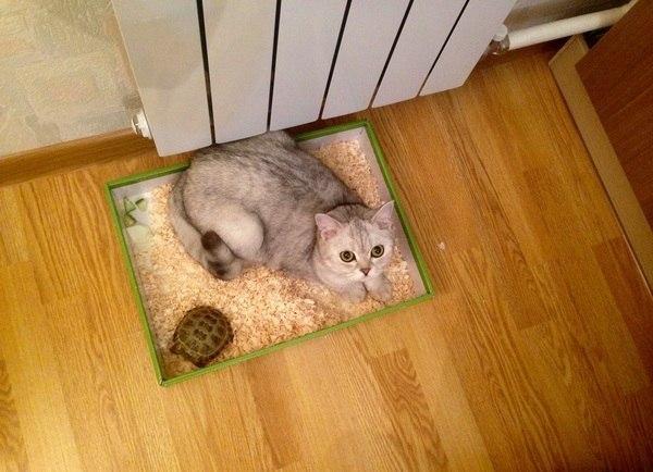 """""""Пocтавили мы, значит, коробку для черепахи..."""""""