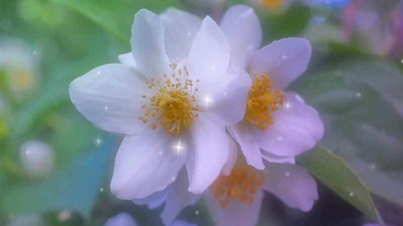 Музыкальный футаж Весенний Яблоневый цвет