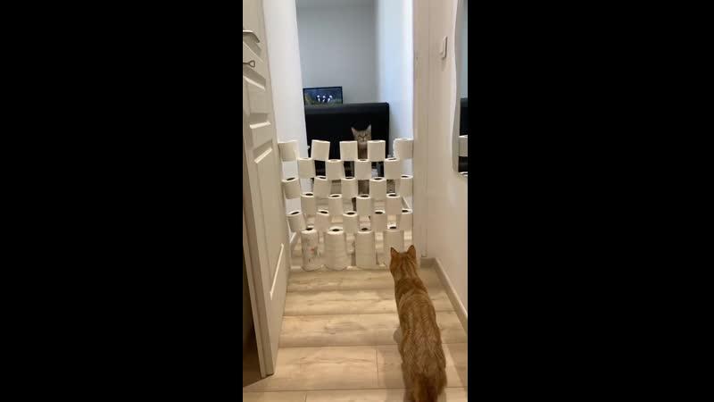 Чем дольше карантин тем более тренированными становятся коты